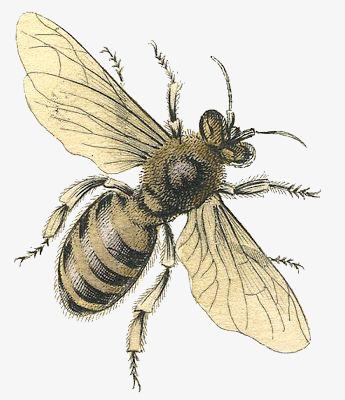 图片 卡通背景 > 【png】 卡通蜜蜂  分类:手绘动漫 类目:其他 格式