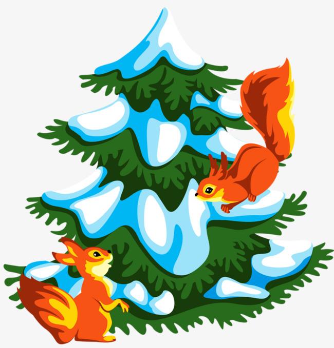 松树的松鼠图片