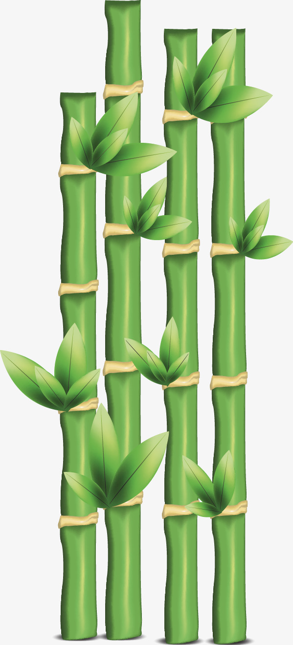矢量手绘绿色竹子