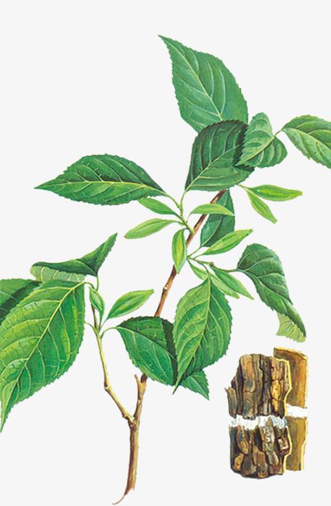 植物 手绘图案 绿树             此素材是90设计网官方设计出品,均