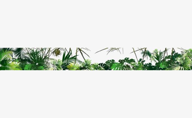 热带雨林树叶