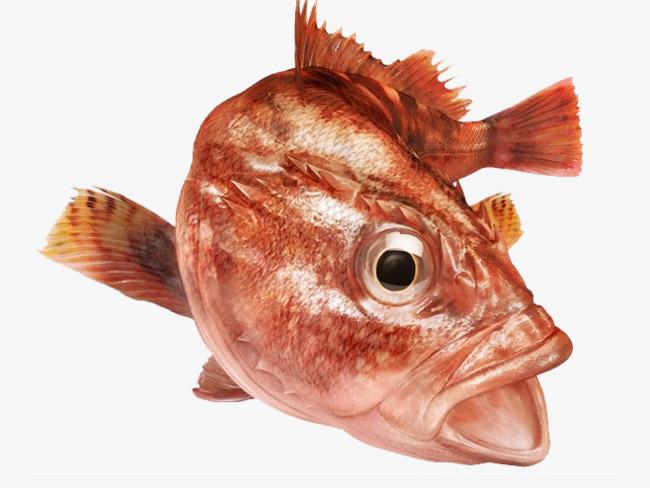 孕妇梦到两头红鱼