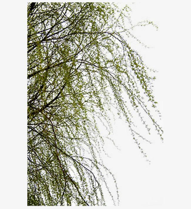 梦见骑在树梢,树摇晃