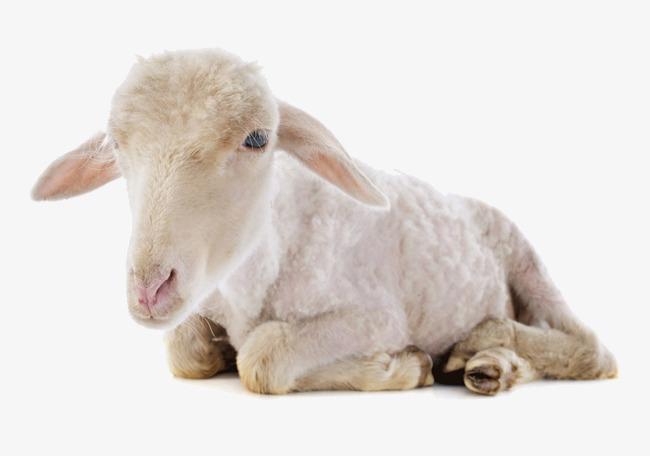小羊动物头简笔画