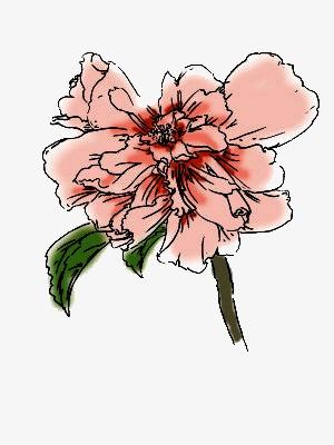 图片 > 【png】 木槿花  分类:手绘动漫 类目:其他 格式:png 体积:0.