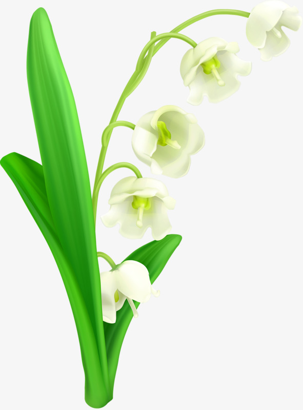 手绘铃兰花