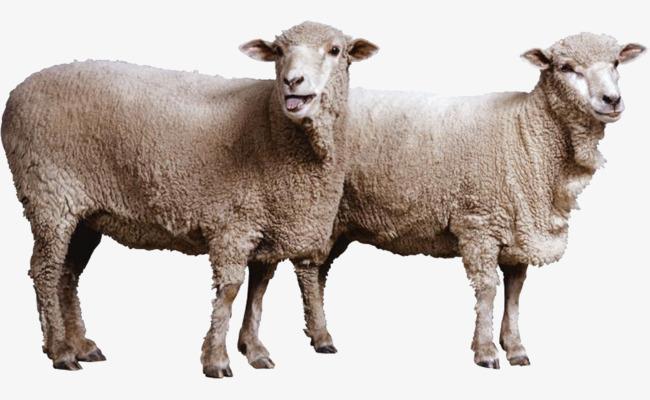 褐色 绵羊  动物 可爱 装饰             此素材是90设计网官方设计