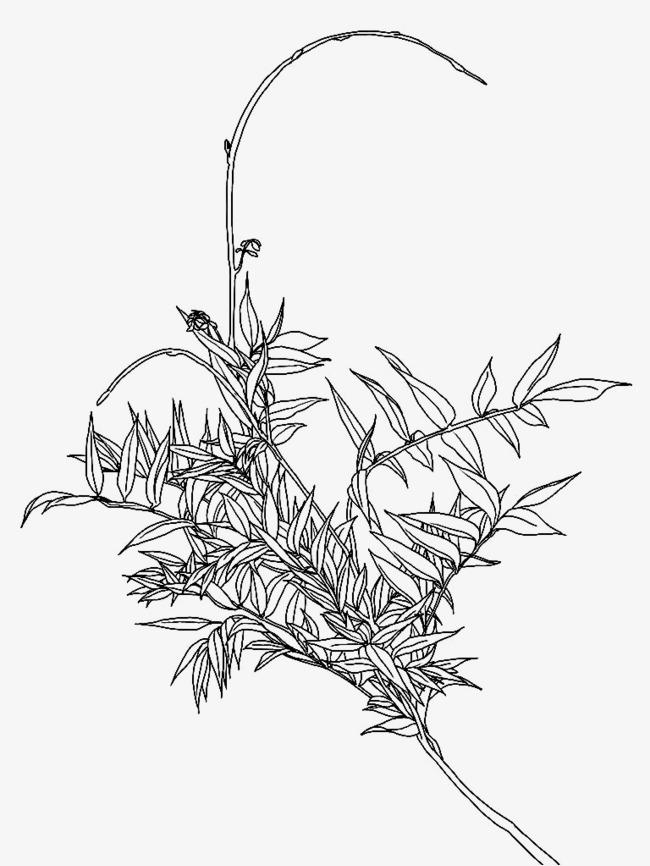树枝手绘线描稿
