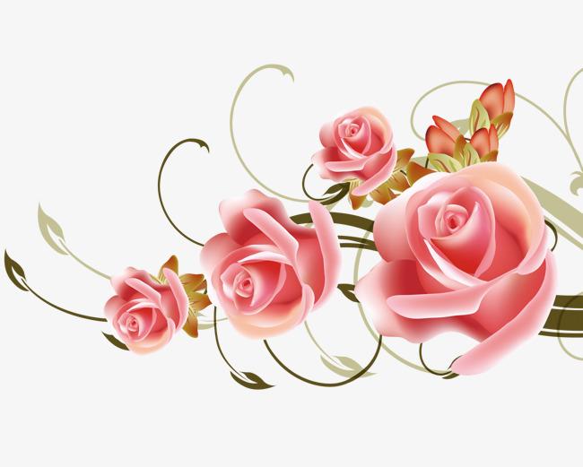 玫瑰花藤蔓