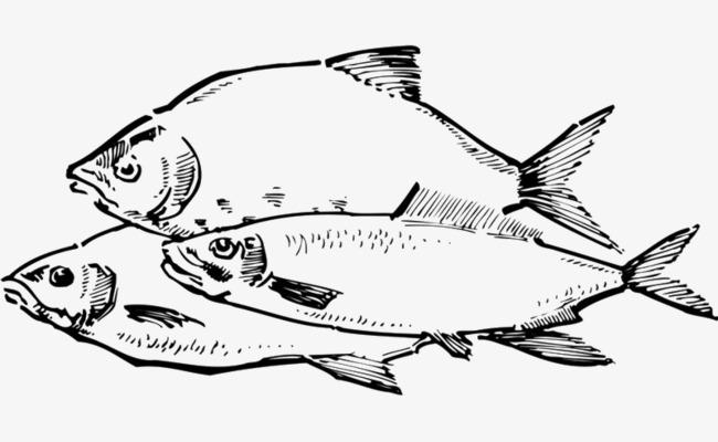 手绘线描鱼图形