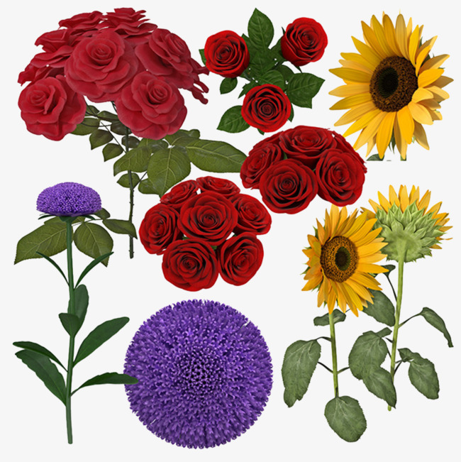 鲜艳的花朵和向日葵