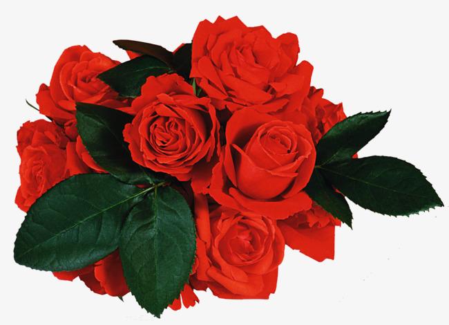 美丽清新的玫瑰