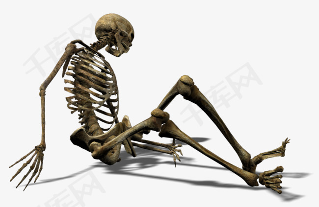 侧躺的人类骨骼