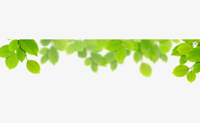 90设计提供高清png素材免费下载,本次边上的树叶作品为设计师杰锐平面图片