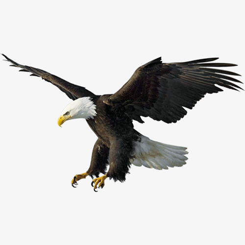 飞翔老鹰素材图片免费下载 高清产品实物png 千库网 图片编号5425431