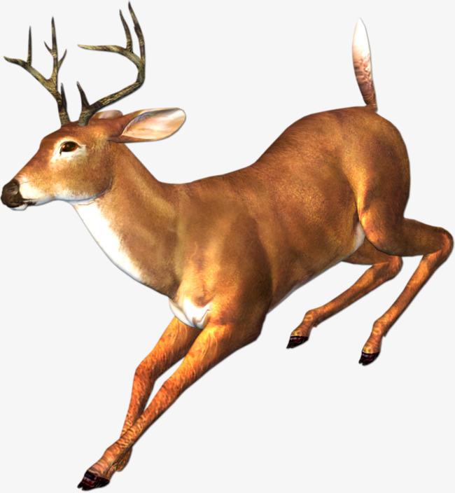 奔跑 鹿角 动物 小鹿             此素材是90设计网官方设计出品,均