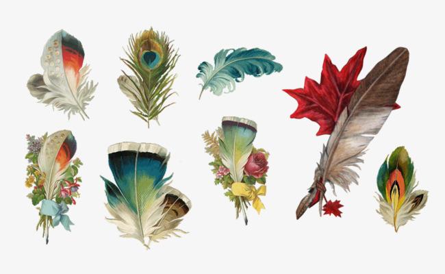彩色羽毛手绘图
