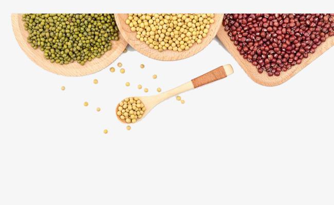 小学生豆类手工制作
