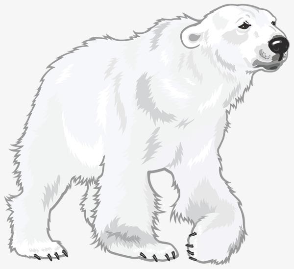 手绘可爱的北极熊