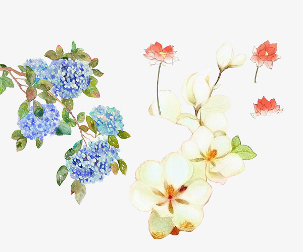 古风 花卉 花朵 手绘