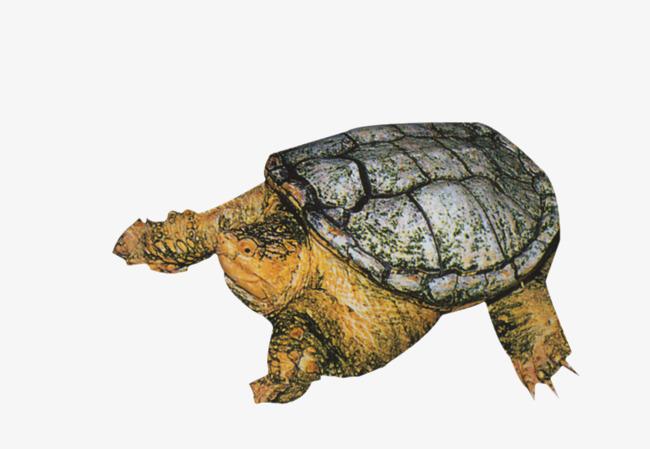乌龟爬行动物