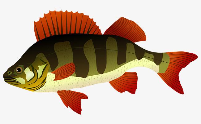 手绘条纹鱼