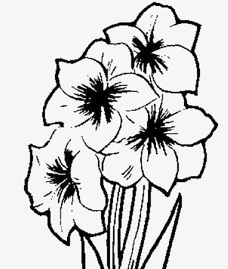 怎么画一束花
