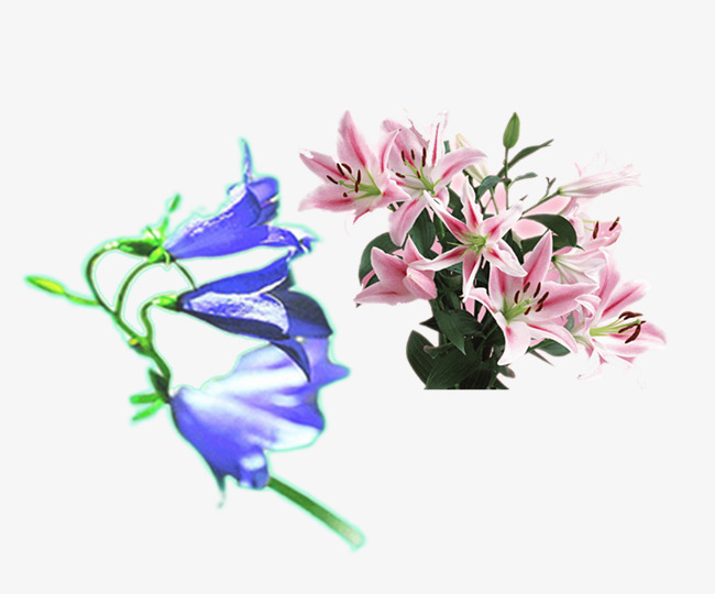 粉色百合花和蓝紫色铃铛花