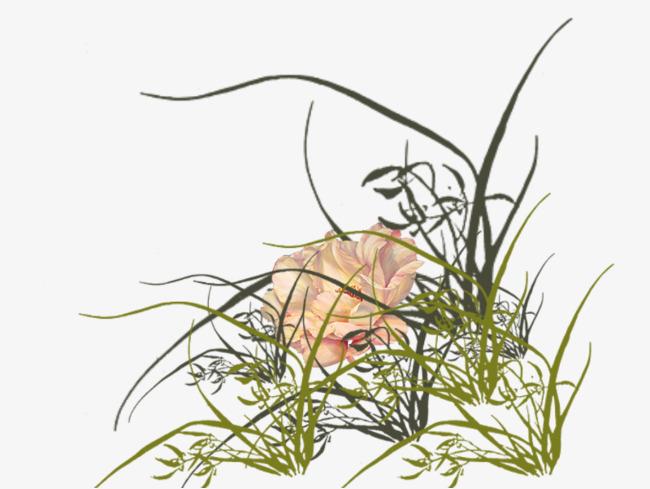 手绘兰花草