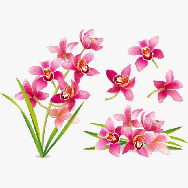 卡通手绘粉红色兰花素材