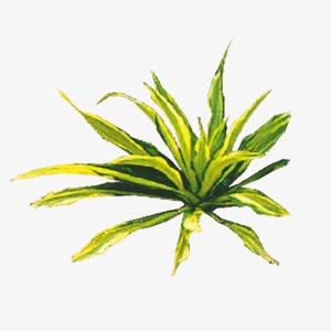 中国风复古手绘草