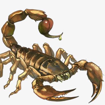 动物蝎子图片大全