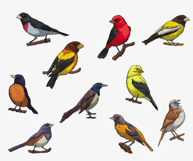 手绘彩色鸟