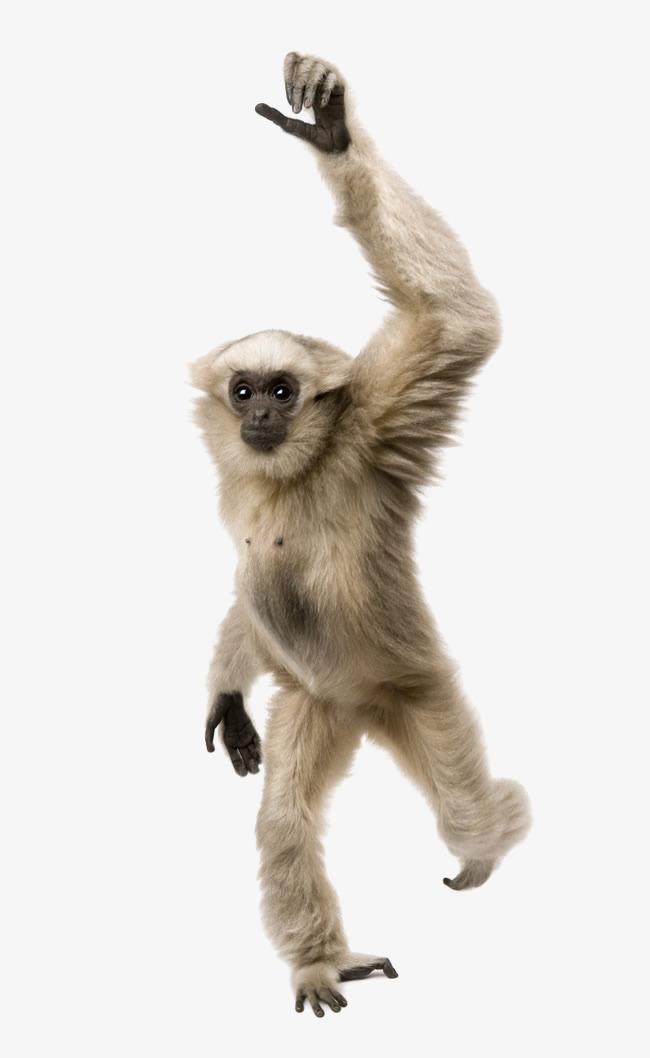 举手 猿猴 猴子 猩猩 动物             此素材是90设计网官方设计