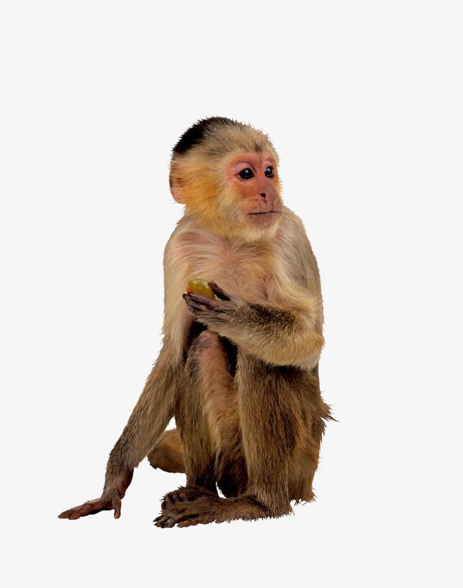 野生动物猴子