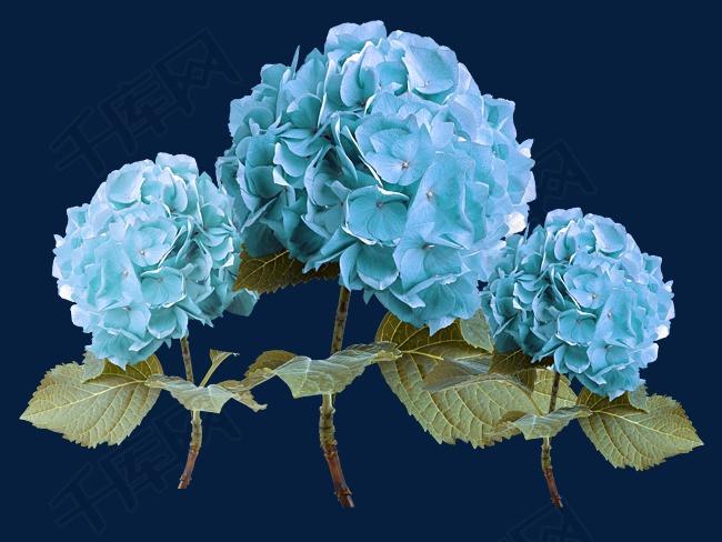 球花绣蓝色素材图片免费下载_工程装饰图案p洛阳千景园林设计高清有限公司图片