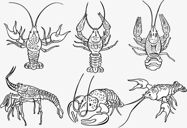 矢量手绘速写龙虾素材图片免费下载 高清装饰图案psd 千库网 图片编号5725001