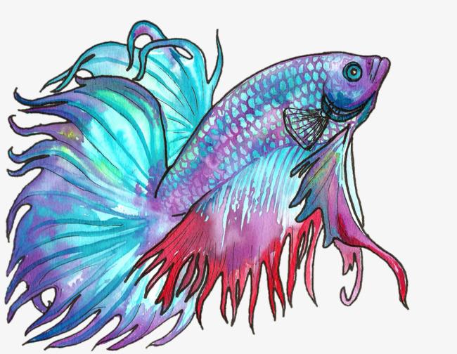 精致的手绘鱼免抠素材图片