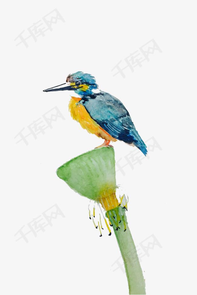 手绘莲蓬与翠鸟素材图片免费下载 高清png 千库网 图片编号5789785
