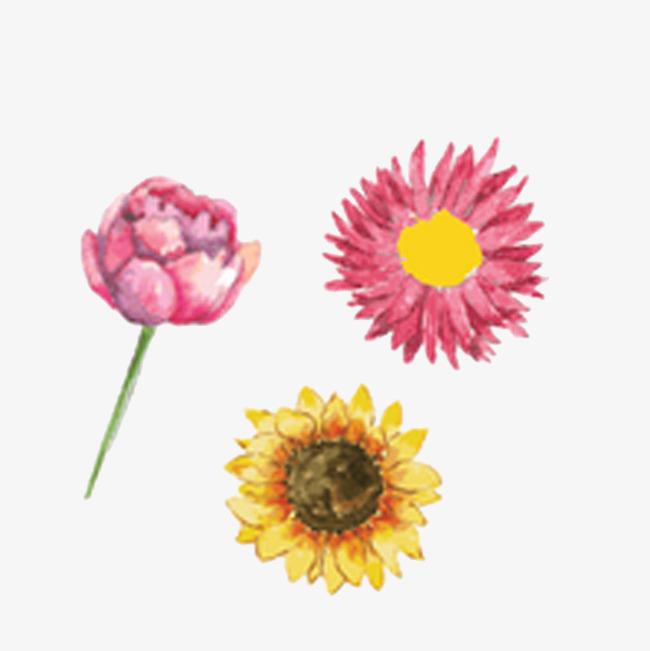 花朵手绘免抠素材