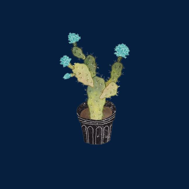 手绘仙人掌开花