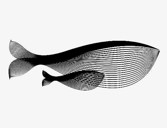 鱼的内部结构图名称