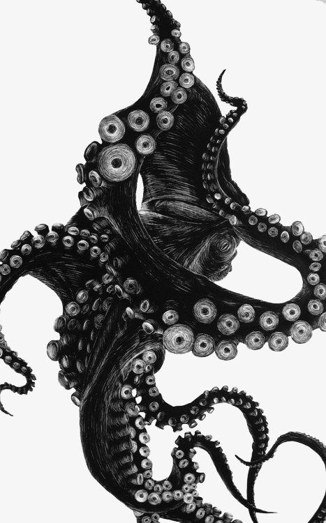 黑色章鱼触角