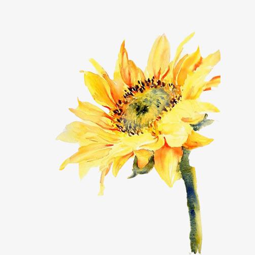 向日葵手绘免抠素材