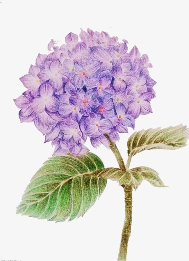 图片 紫色背景 > 【png】 紫色花朵  分类:手绘动漫 类目:其他 格式