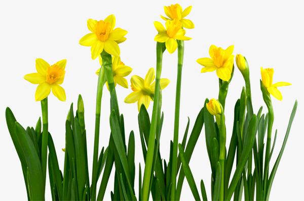 彩色手绘小黄花