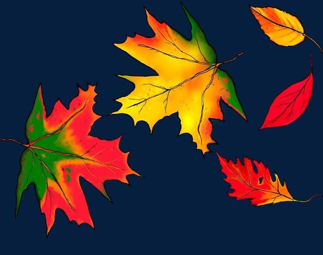 秋天手绘枫叶图片
