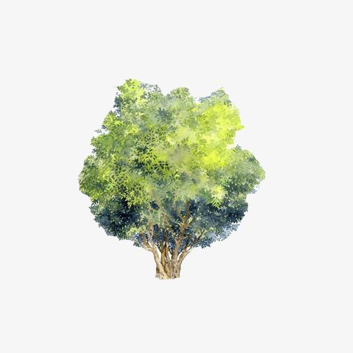 一颗大树彩绘图片