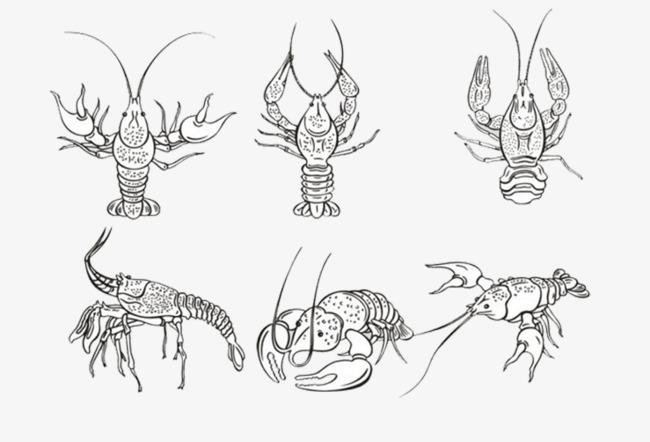 龙虾姿势简笔画