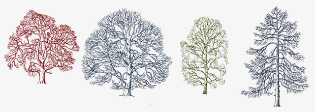 雪松平面图手绘